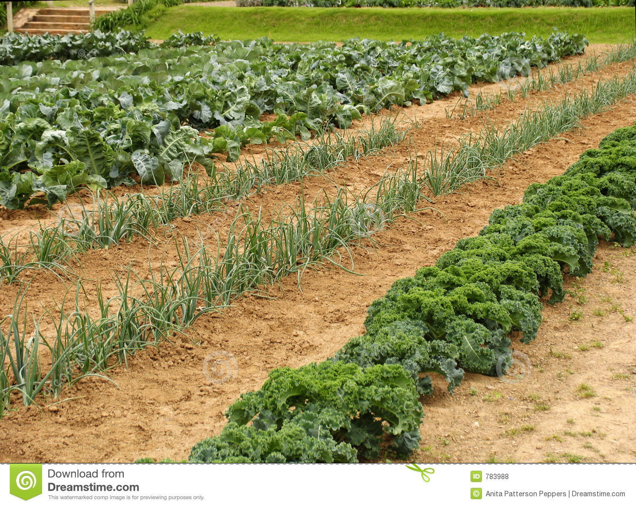 Garden row clipart vegetable image royalty free Vegetable Garden Rows Clipart - Clipart Kid image royalty free