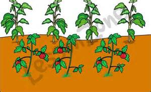 Garden row clipart vegetable png free library Vegetable Garden Clip Art Radishes Clip Art Vegetable Garden Clip ... png free library
