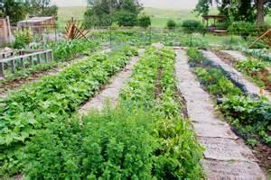 Garden row clipart vegetable clipart freeuse stock Vegetable Garden Rows Clip Art Images & Pictures Becuo, Vegetable ... clipart freeuse stock