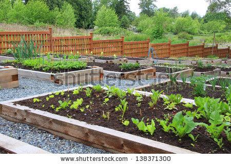 Garden row clipart vegetable vector free Vegetable Garden Stock Images, Royalty-Free Images & Vectors ... vector free