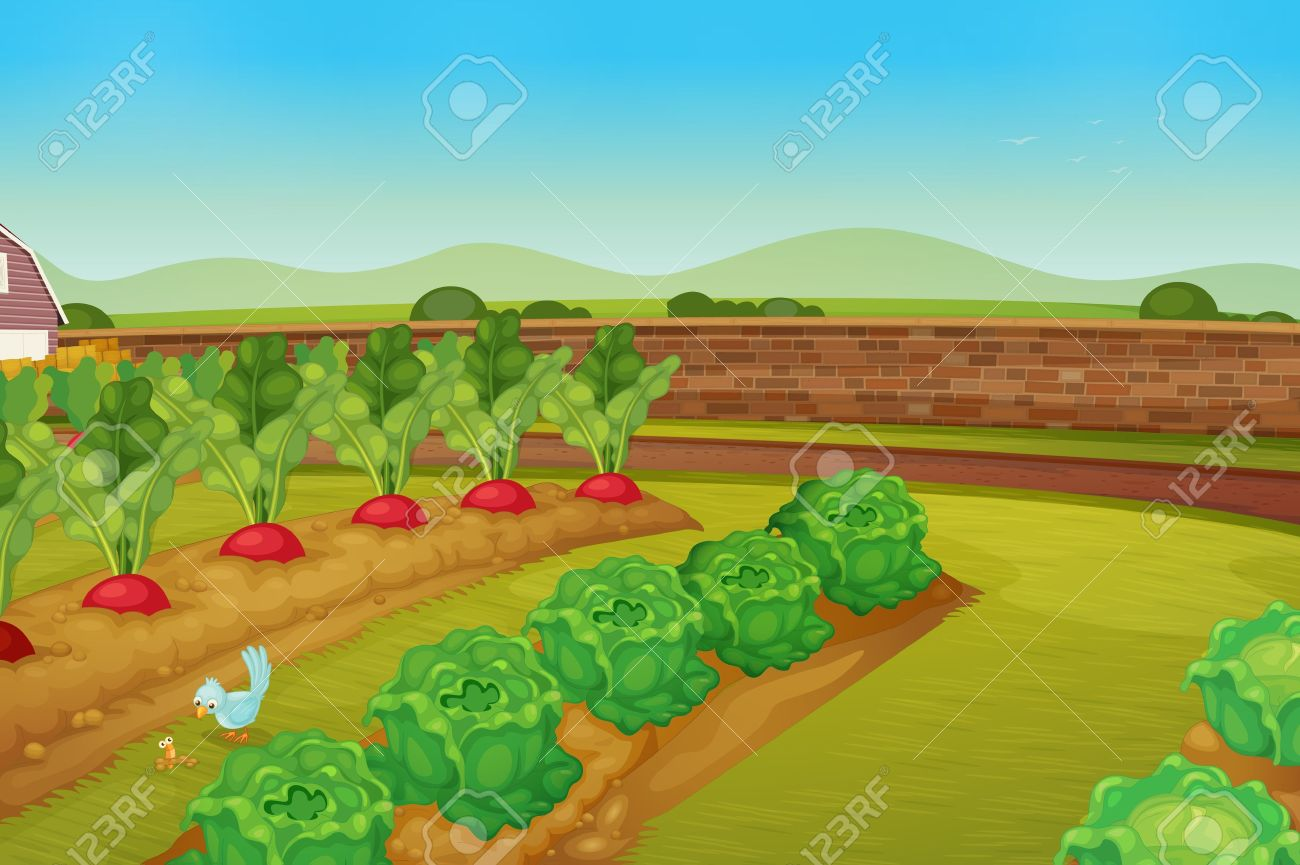 Garden row clipart vegetable banner free download Garden row clipart vegetable - ClipartFest banner free download