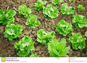 Garden row clipart vegetable clipart free download Vegetable Garden Rows Clip Art Images & Pictures Becuo, Vegetable ... clipart free download