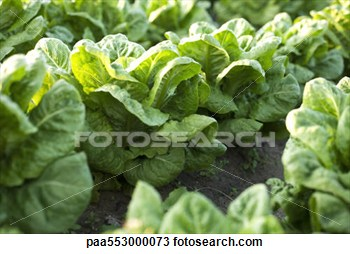 Garden row clipart vegetable jpg black and white stock Vegetable Garden Rows Clipart - Clipart Kid jpg black and white stock
