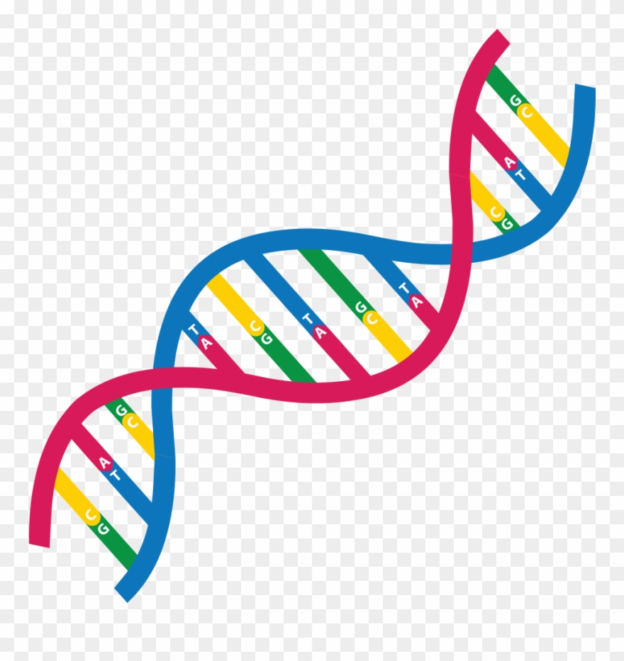Library of genome svg black and white library png files ...