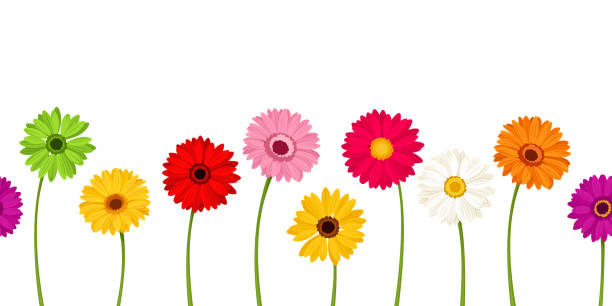 Gerber daisy border clipart graphic freeuse download Top 60 Gerbera Daisy Clip Art Vector Graphics And Illustrations ... graphic freeuse download