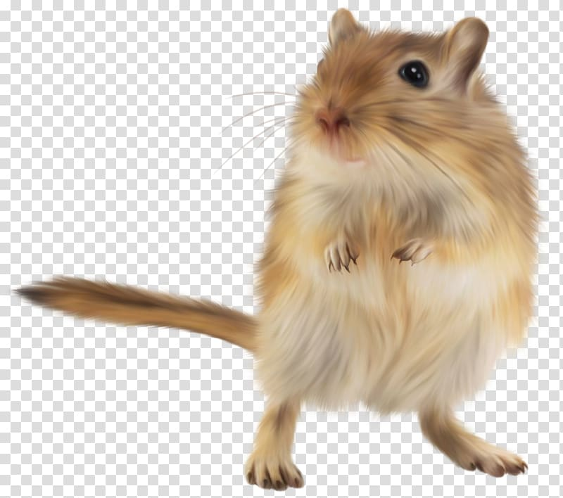 Gerbil clipart clipart black and white download Gerbil Golden hamster Rodent Mouse, mouse transparent background PNG ... clipart black and white download