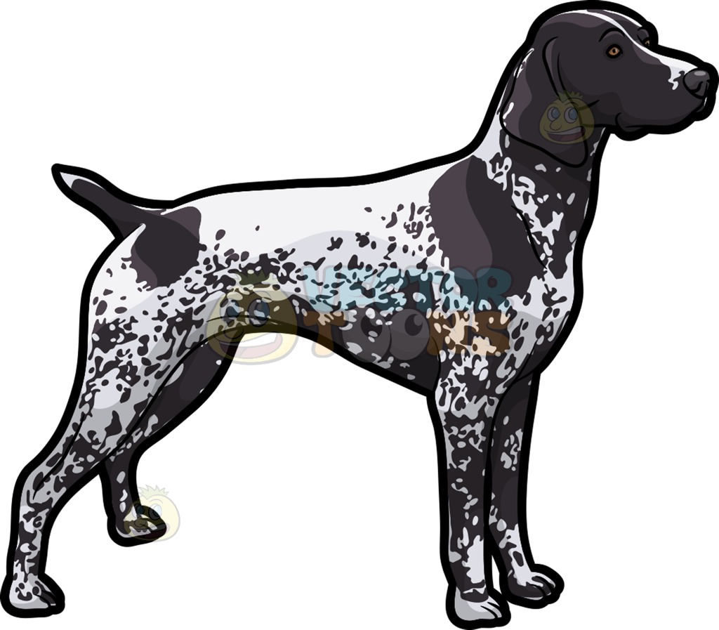 German longhaired pointer clipart image free stock An Observant German Shorthaired Pointer Pet Dog Cartoon Clipart image free stock