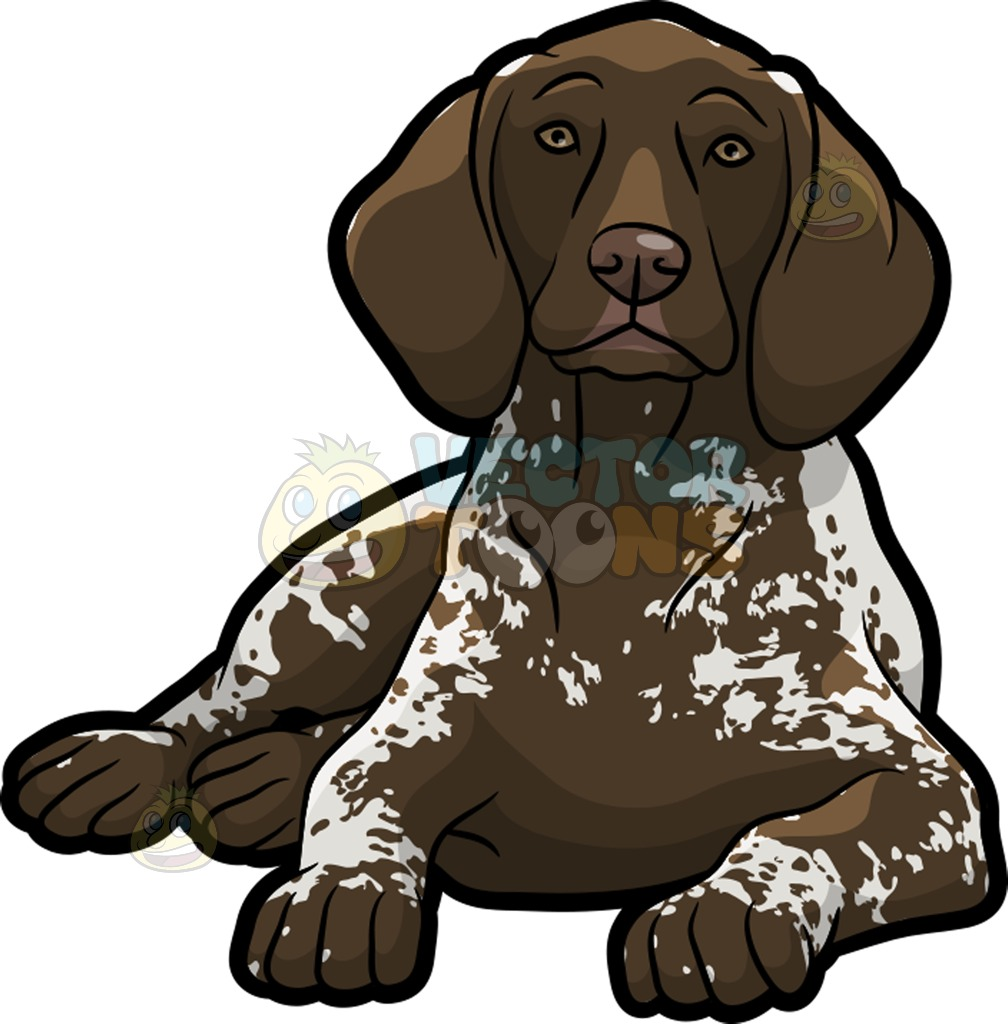 German longhaired pointer clipart clip art download A Resting German Shorthaired Pointer Pet Dog Cartoon Clipart clip art download