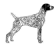 German longhaired pointer clipart vector black and white ABOUT US vector black and white