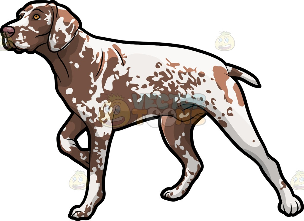 German longhaired pointer clipart graphic German shorthaired pointer clipart - ClipartFest graphic