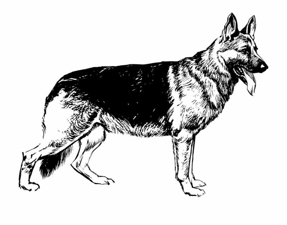 German shepherd clipart image royalty free stock German Shepherd White Shepherd Saarloos Wolfdog Puppy - German ... image royalty free stock