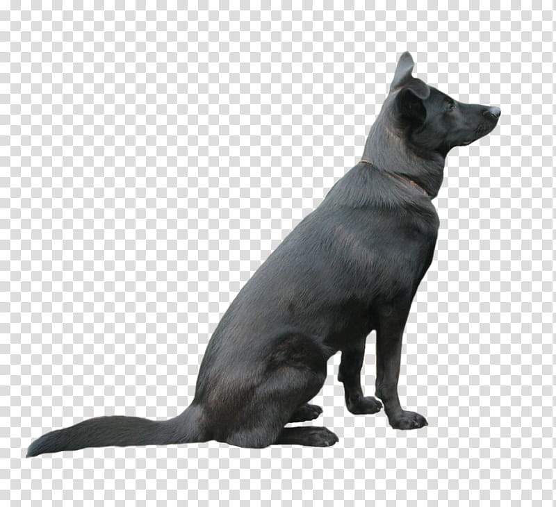 German shepherd laying down clipart banner library download Black Dog, black German shepherd sitting down transparent background ... banner library download