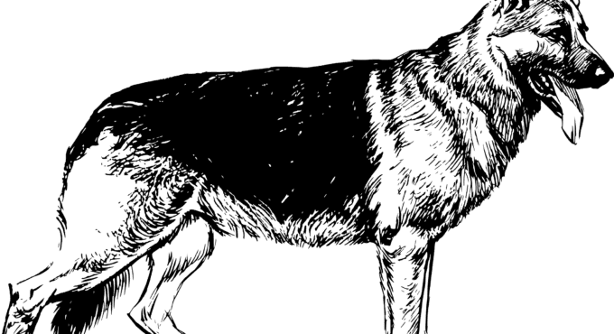 German shepherd silhouette black and white clipart graphic royalty free library German Shepherd White Shepherd Puppy Shiloh Shepherd dog Clip art ... graphic royalty free library