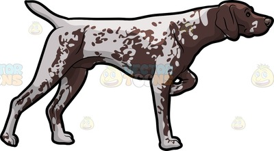 German shorthaired pointer clipart png stock German Shorthaired Pointer Cartoon Clipart png stock