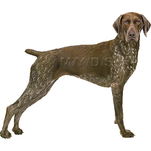 German shorthaired pointer clipart svg black and white stock German Shorthaired Pointer clipart graphics (Free clip art svg black and white stock