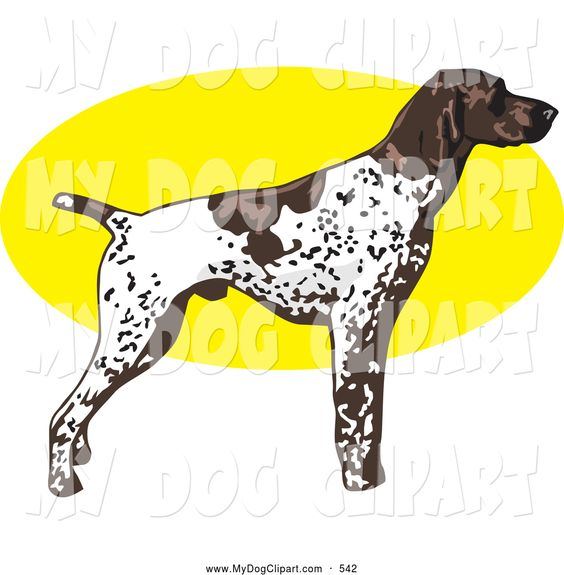 German shorthaired pointer clipart image royalty free download german shorthair pointer graphics | Clip Art of a Stern White and ... image royalty free download