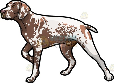 German wirehaired pointer clipart