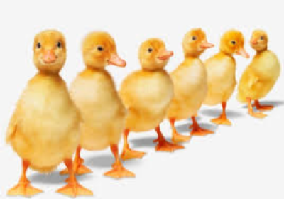 Get your ducks all in a row clipart black and white stock Download Free png Versatile Resourcing can help get all your ducks ... black and white stock
