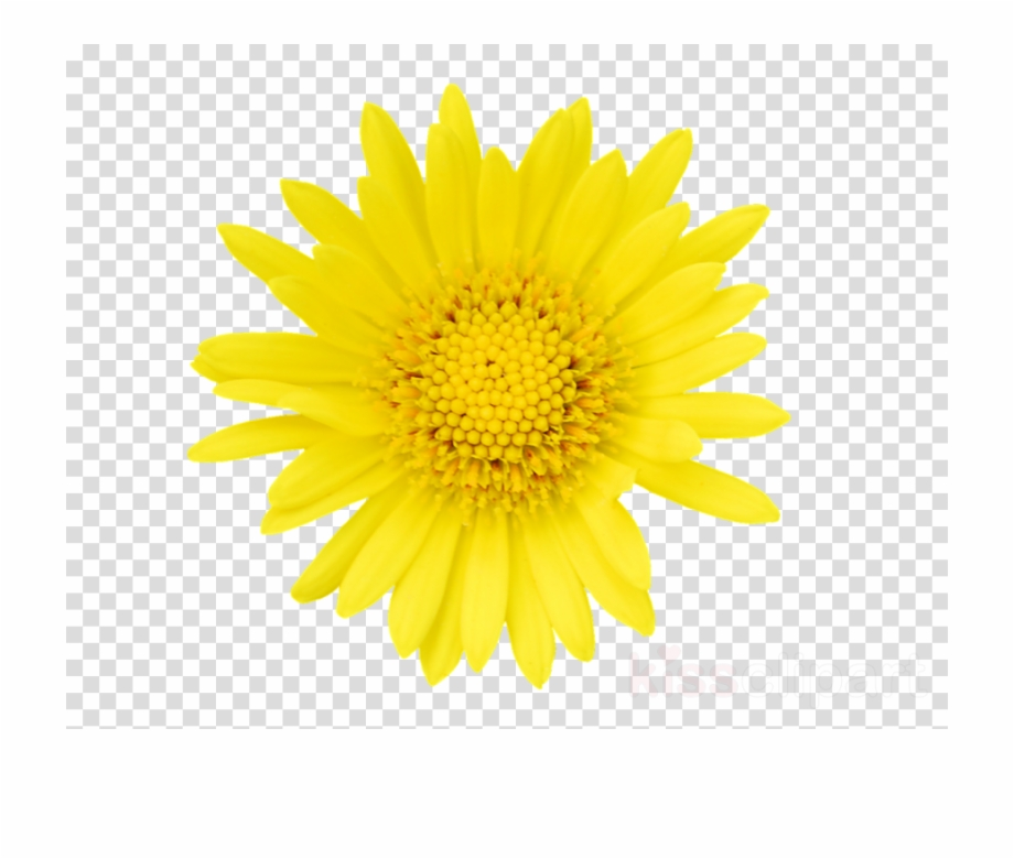 Tickseed clipart picture black and white stock Tickseed Clipart Stock Photography Getty Images Flower Free PNG ... picture black and white stock