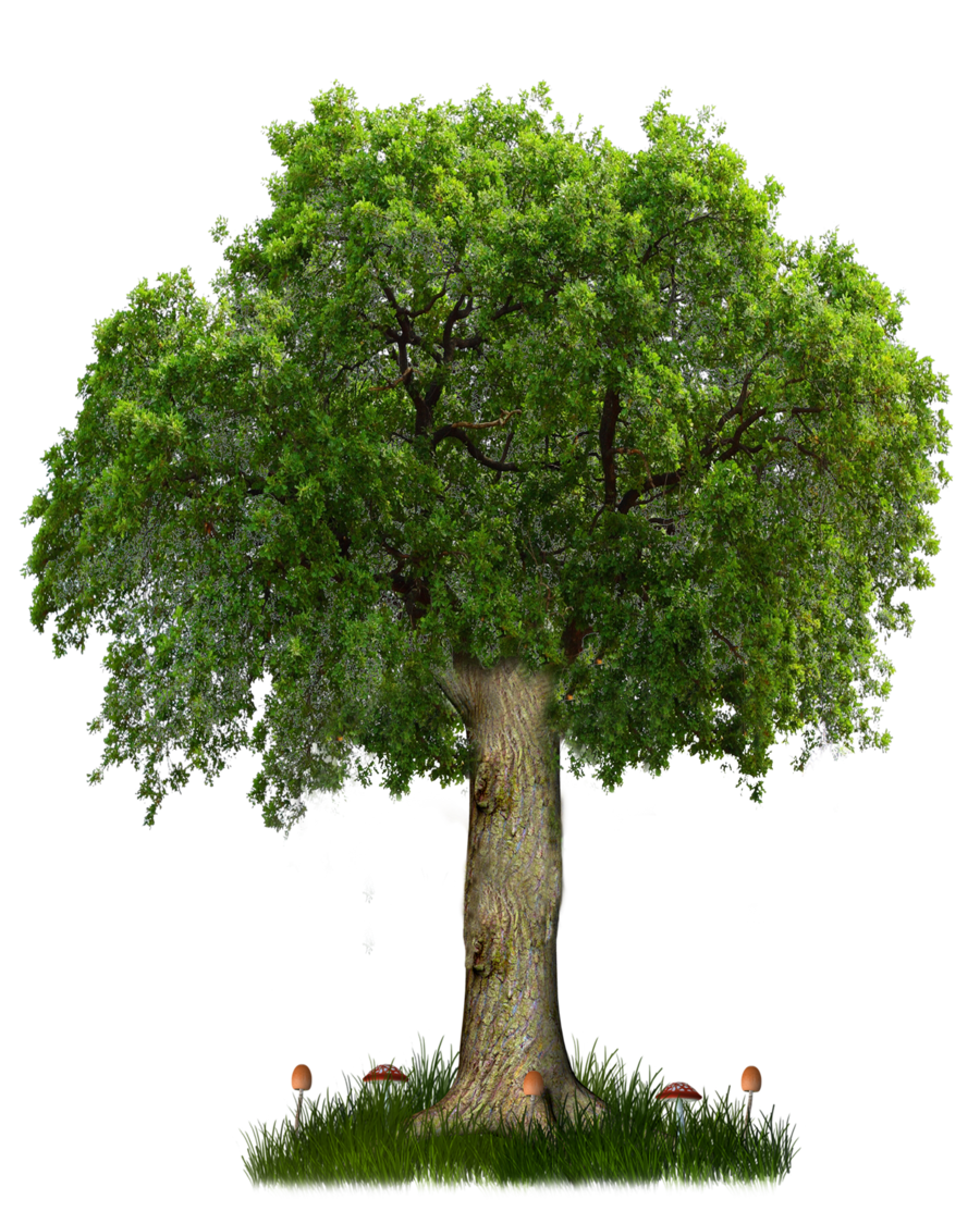 Realistic tree clipart black and white Tree PNG Images - Free Icons and PNG Backgrounds black and white