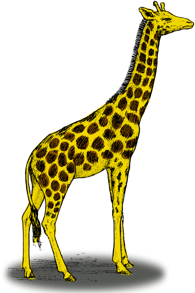 Giraffe clipart kostenlos png transparent library giraffe to color pages free printable giraffe coloring pages for ... png transparent library