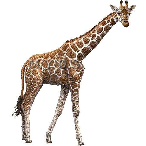 Giraffe clipart kostenlos transparent Giraffe Clip Art Free - Cliparts.co transparent