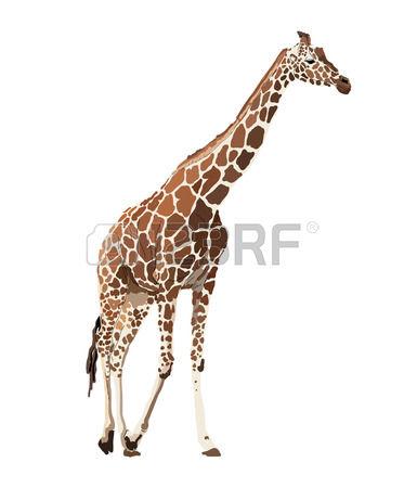 Giraffe clipart kostenlos graphic black and white 19,621 Giraffe Stock Vector Illustration And Royalty Free Giraffe ... graphic black and white