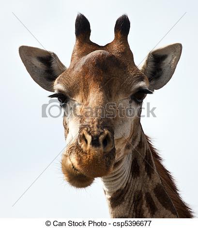 Giraffe kopf clipart vector royalty free Giraffe kopf clipart - ClipartFox vector royalty free