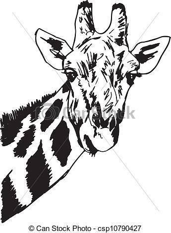 Giraffe kopf clipart banner transparent stock Vektor Illustration von vektor, kopf, Skizze, Giraffe, abbildung ... banner transparent stock