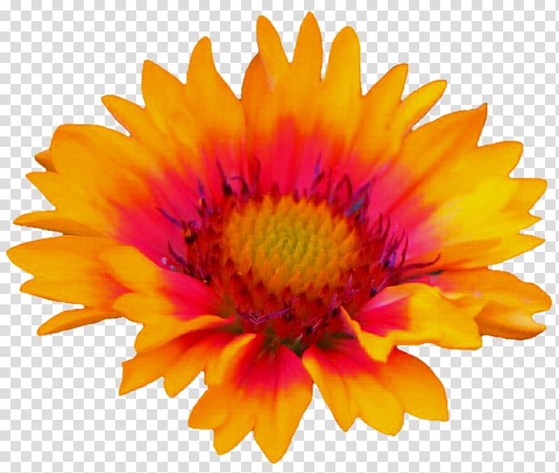Gloriosa daisy clipart clip Geometric Style Gloriosa Daisy transparent background PNG clipart ... clip
