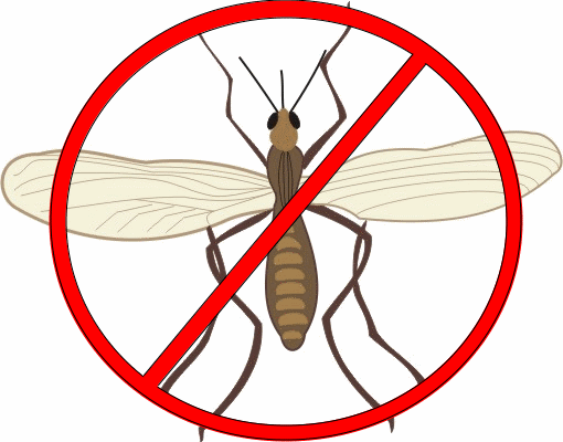 Gnats clipart jpg royalty free library 30 Ways to Get Rid of Gnats Inside and Outside the House jpg royalty free library