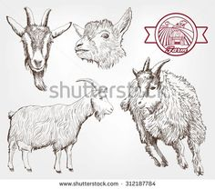 Goat vector clipart banner transparent stock 12 Best Goat Vector images in 2017 | Goats, Vector vector, Vectors banner transparent stock