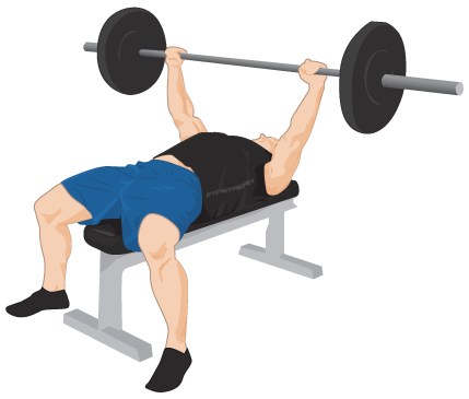 Going to the gym clipart clipart library download going to gym clipart 51295 - Exercise Bench PNG Transparent BenchPNG ... clipart library download