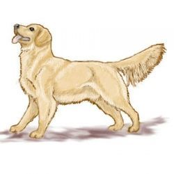 Golden dog clipart clipart free library golden retriever dog clipart | Love Goldens! | Dogs | Dog clip art ... clipart free library