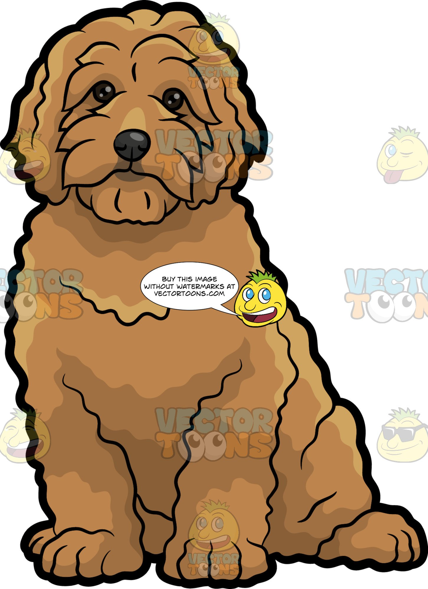 A Very Cute Golden Doodle Dog jpg royalty free