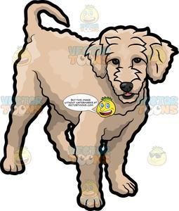 Golden doodle clipart jpg stock An Adorable Golden Doodle Dog jpg stock