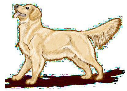 Golden retriver clipart image black and white stock Golden Retriever Clip Art   baby   Dogs, Pet dogs, Animals image black and white stock