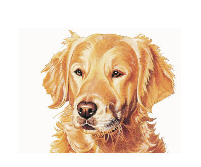 Golden retriver clipart png transparent library 94+ Golden Retriever Clip Art | ClipartLook png transparent library