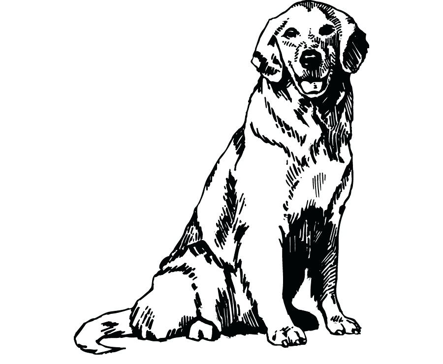 Golden retriver clipart png library stock Collection of Golden retriever clipart   Free download best Golden ... png library stock