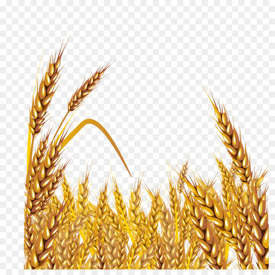 Golden wheat clipart image royalty free download Wheat Cartoon clipart - Wheat, Food, Grass, transparent clip art image royalty free download