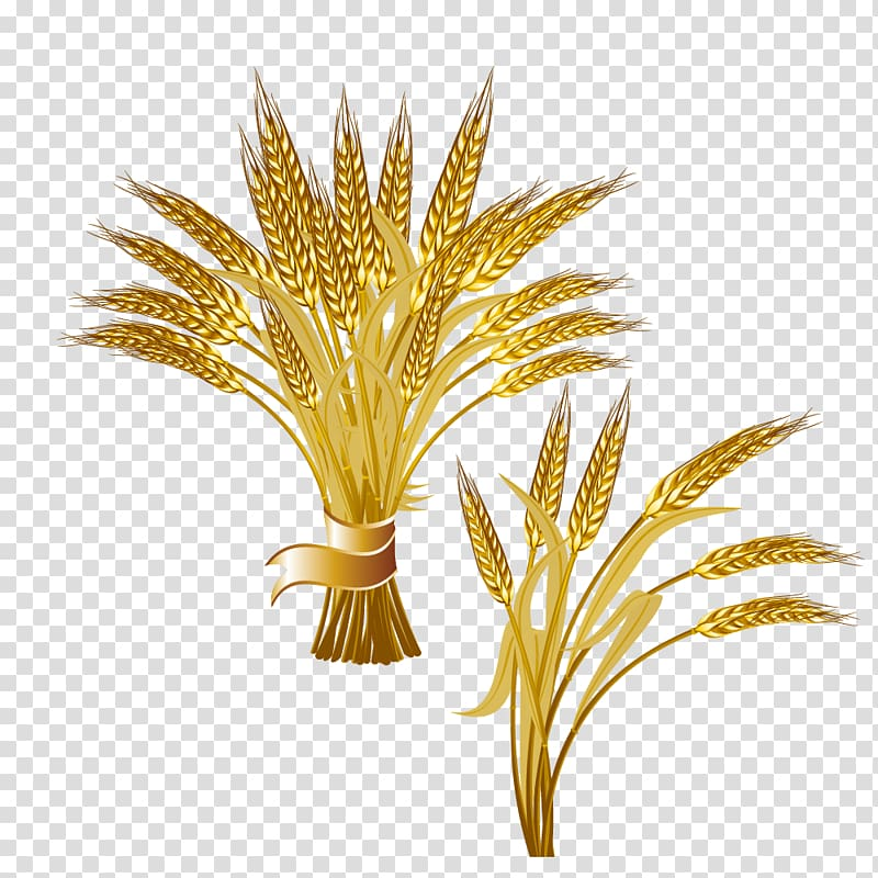 Golden wheat clipart svg freeuse Common wheat Ear Logo , Bunch of golden wheat transparent background ... svg freeuse