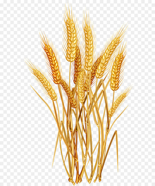 Golden wheat clipart clip art freeuse library Wheat Euclidean vector Clip art - Golden wheat - Nohat clip art freeuse library