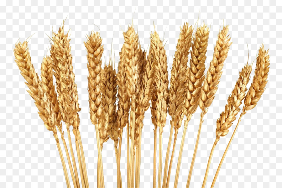 Golden wheat clipart jpg library library Download Free png Cereal Wheat Grain Clip art Golden wheat png ... jpg library library