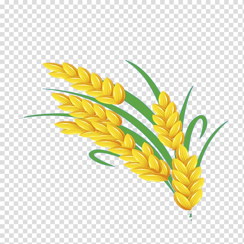 Golden wheat clipart vector library Wheat, Golden wheat transparent background PNG clipart | HiClipart vector library