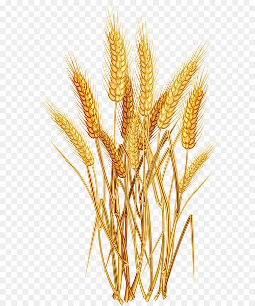 Golden wheat clipart clip art stock Wheat Euclidean vector Clip art - Golden wheat - Nohat clip art stock