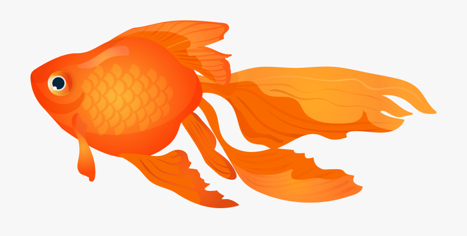 Goldfish cartoon clipart graphic download Goldfish Vector Fish Top View - Goldfish Clipart Png #2527 - Free ... graphic download