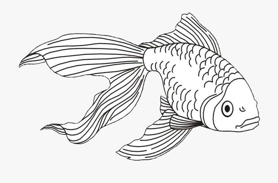 Goldfish clipart black and white black and white Goldfish Clipart Beta Fish - Realistic Line Drawing Of Fish #287453 ... black and white