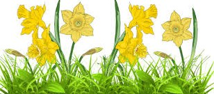Google images daffodils image transparent stock springtime | bemuzin image transparent stock