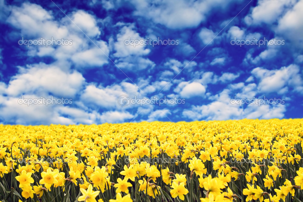 Google images daffodils clip art freeuse library Google images daffodils - ClipartFest clip art freeuse library