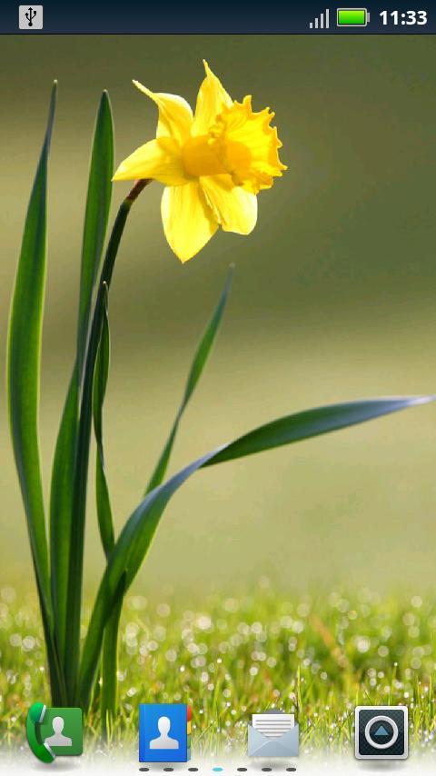 Google images daffodils svg freeuse download Google images daffodils - ClipartFest svg freeuse download